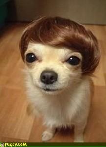 dog-wig1