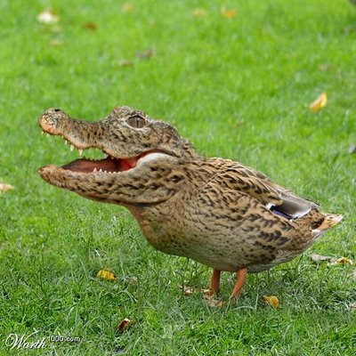 crocoduck crocodile duck