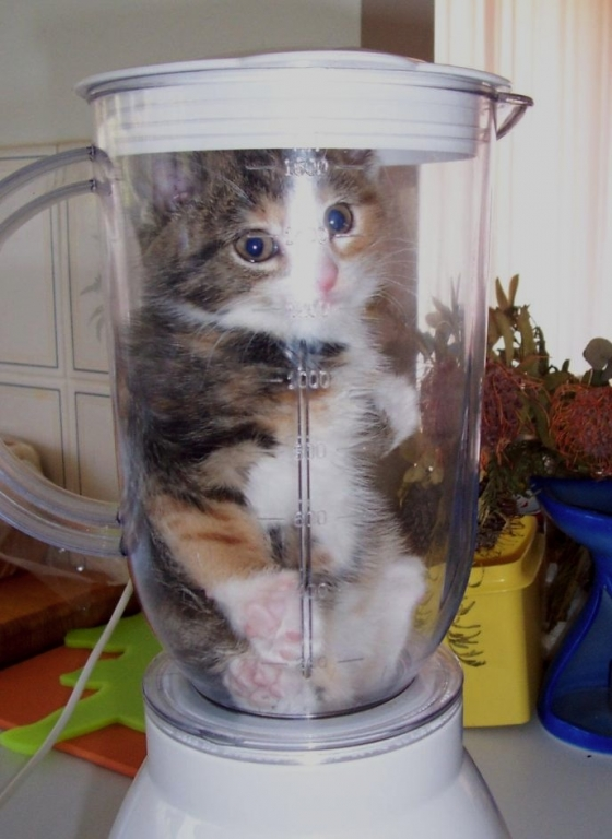 kitten_in_blender