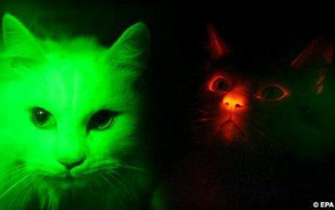 OMG GLOW CAT!